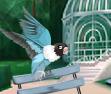 Recomendación Pájaro